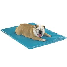 LG Canine Cooler Therapeutic Pad  Tile and cement floors are cool, but cruel—they're hard on joints causing calluses and worsening existing health conditions. This unique pad utilizes Soothsoft® Comfort Technology, fluid-cool memory foam that effectively soothes pain, swelling, stress on your dog's pressure points, hip and elbow dysplasia, discomforts of aging, ailments and injuries. Simply activate with water and this pad provides cooling relief at room temperature. he Company Of Dogs