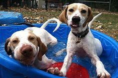 Choosing Playmates for Your Dog | ASPCA