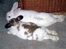Good site for rabbit stuff