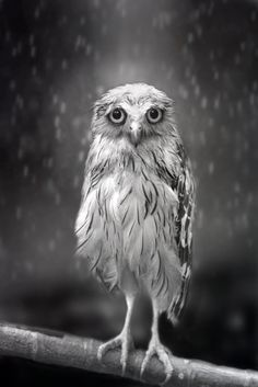 Standing in the rain by Sham Jolimie.