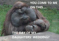 The Godfather Gorilla