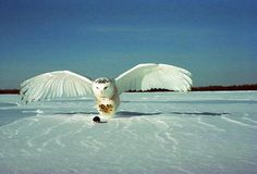 15 Incredible Pictures of Owls with Freshly Caught Prey