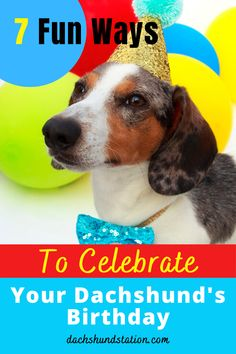 How Do You Plan a Birthday Party For A Puppy?  Celebrate Your Dachshund's Birthday include a puppy photo session, puppy birthday gifts, yummy pupcakes, and some puppy dog games.  #dachshund  |dachshund birthday party| Dog Birthday Gift, Puppy Birthday Parties, Birthday Ideas, Dachshund Puppies, Dachshund Love, Dachshunds, Puppy Gates, Dog Games, Pet Dogs