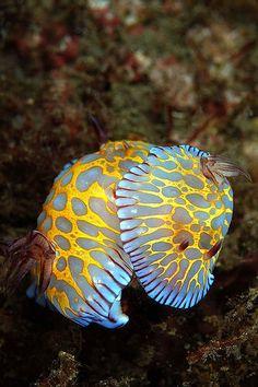 It's like a sea jewel!
