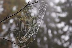 cobweb spider http://shjo.uk/ZCdvcM