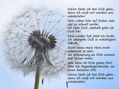 Kleine Seele ich lass Dich gehn ... #Trauergedichte #ANUBIS #Tierbestattung Anubis, Mothers Day Quotes, In Loving Memory, True Friends, Helmut Schmidt, Sissi, Yorkies, Gw, Sadness