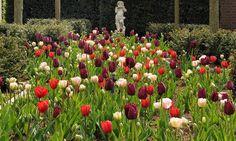 Spring Combination Ideas, Bulb Combinations, Plant Combinations, Flowerbeds Ideas, Spring Borders,Tulip 'Angelique',Tulip 'Couleur Cardinal',Tulip 'Curly Sue',Tulipa 'Angelique',Tulipa 'Couleur Cardinal',Tulipa 'Curly Sue'
