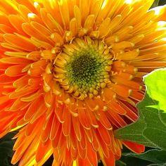 Orange flower #flower # garden #orange