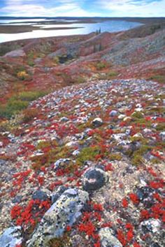 Tundra, Northwest Territories