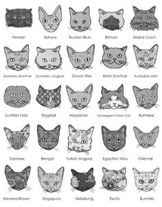 I had no idea more than two kinds of cats existed. This is fantastic information.