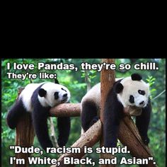 pandas always have a way to make you smile