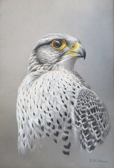 D.M.Henry gyr falcon gouache