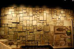 Steinwand (Fossils at Utah Fieldhouse of Natural History in Vernal, Utah)