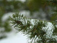 Minnesota Seasons - Winter