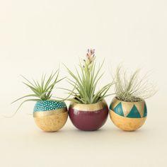 Air Plant Planter Trio with Air Plants  Teal por ThriftedandMade, $47.00