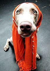 Edie Beale dog