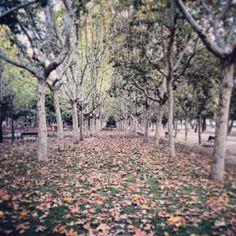 Alfombra de hojas en el Parque del Calero #Madrid #otoño   Flickr: Intercambio de fotos