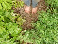 Article sur la place que j'accorde à la nature dans ma pratique du jardinage et les bénéfices que ça m'apporte.