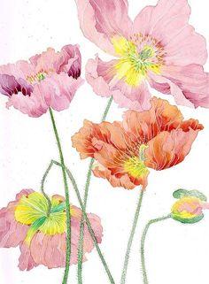 Iceland poppies:  watercolour digital print on by GabbyMalpas