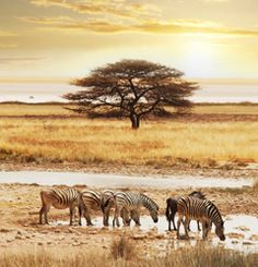 Most interesting attractions in Namibia | Travel Blog