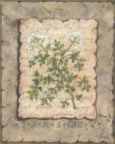 Vintage Herbs Parsley (Constance Lael)