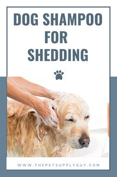 Best Dog Shampoo for Shedding & Itchy Skin (Buying Guide) #thepetsupplyguy #pet #pets #animal #dog #dogs #puppy #puppies #shampoo Best Dog Shampoo, Dog Supplies, Dog Care, Best Dogs, Shed, Puppies, Good Things, Animal