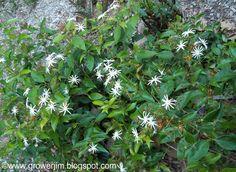 south texas plants low maintenance | Low-maintenance Landscape Plants For South Florida