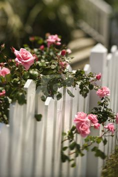 Roses growing over fence. Pink roses growing over white picket fence , Pink Garden, Dream Garden, Garden Roses, Beautiful Gardens, Beautiful Flowers, White Picket Fence, Picket Fences, White Fence, Building A Fence