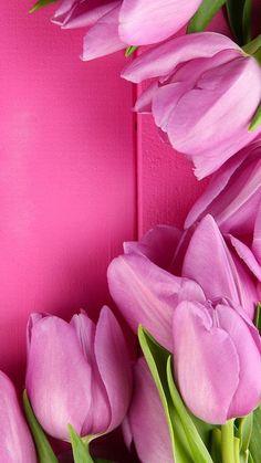 Pink Live Wallpaper - Bing images
