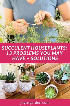 Are you struggling to keep your succulents alive Succulent houseplants are easy to grow, but you may experience succulents problems at some point. Overwatering succulents is the number one reason you ma bye having problems. Check out this list of 13 succulent issues plus solutions & actions to take. #succulentsindoors #succulentsforbeginners