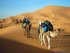Camel ride in merzouga, Morocco