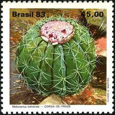 Brazilian Flora - Coroa-de-frade