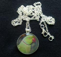 Handmade Indian Ringneck Parakeet 25mm Pendant Necklace (PG-01055) Glass Pendants, Parrot, Crochet Earrings, Rainbow, Pendant Necklace, Chain, Parakeet, Silver, Handmade