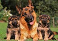 De que se puede hablar hoy: Perro de raza alemán