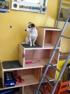 Own a climbing canine? Make staircase bookshelves for your pup (and your books) at ReadyMade.