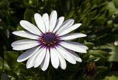 Free Stock Photos and Royalty-Free Pictures Free Photos, Free Stock Photos, Photo Stock Images, Royalty Free Pictures, Amazing Photography, Daisy, Creative, Margarita Flower, Bellis Perennis