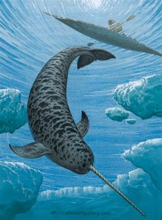 The Narwhal The narwhal, or narwhale, Monodon monoceros, is a medium-sized toothed whale that lives year-round in the Arctic. It has long been hunted by the Ocean Art, Ocean Life, Inuit People, The Narwhal, Aquarium, Arctic Animals, Wale, Underwater Life, Delphine