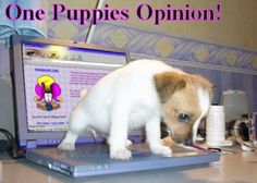 One Puppies Opinion