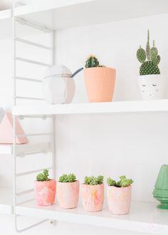Macetas y cactus decorativos