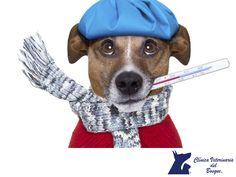 Evita el resfriado de tu mascota. LA MEJOR CLÍNICA VETERINARIA DE MÉXICO. La temporada de frío se aproxima y es importante conocer los tips para evitar que tu perro tenga un resfriado. Algo fundamental es evitar los cambios bruscos de temperatura, ya que son la principal causa de resfriados. Evita los contrastes fuertes de temperatura y las corrientes de aire. En Clínica Veterinaria del Bosque te recomendamos acudir al veterinario si consideras que tu amigo contrajo un resfriado…