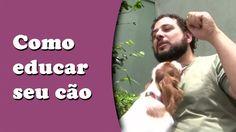 Como educar seu cão - Dicas de adestramento