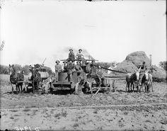 Circa 1910. Webster threshing crew, north of Gibbon, Nebraska. Solomon D. Butcher [Nebraska State Historical Society - nbhips 12348] http://www.loc.gov #American #History #Nebraska