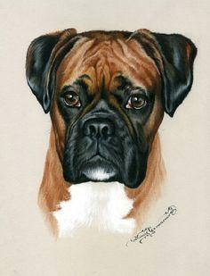 Irina Garmashova-Cawton - Artiste Peintre Animalier - Spécialiste des Peintures et Portraits Félins - Couleurs - Chien Boxer
