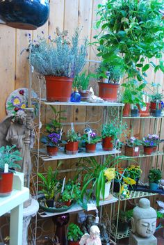 Herbs and indoor plants for sale
