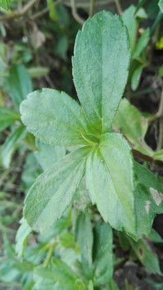 Any leaf on decoration bush in Alun Alun