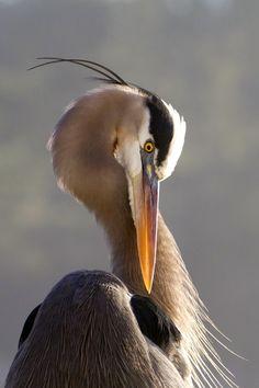 Pretty Birds, Beautiful Birds, Animals Beautiful, Exotic Birds, Colorful Birds, Wildlife Photography, Animal Photography, Photo Animaliere, Shorebirds