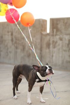 happy puppy with balloons