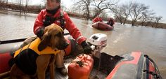 Fargo, N., April 2009 --Valley Water Rescue member, Mike Knorr and search dog, Barnaby search for a missing victim in the Fargo/Moorhead area on the Red River. Search And Rescue Dogs, Dog Search, Military Working Dogs, Military Dogs, Water Rescue, Best Hero, Guide Dog, Bloodhound, Therapy Dogs