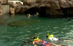 Under the Sea With Supplied-Air Snorkeling in Rainbow Reef at Aulani, a Disney Resort & Spa