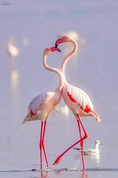 Flamingos 😘 💕 by Mihika Tamrakar / Bird Painting Acrylic, Eagle Painting, Flamingo Art, Pink Flamingos, Flamingo Wallpaper, Animals Of The World, Animals And Pets, Beautiful Creatures, Animals Beautiful